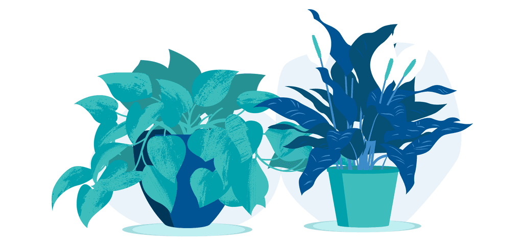 5 Plants That Won't Die in Your Office